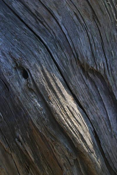 Photograph - Driftwood Ridges 4 by David Kleinsasser