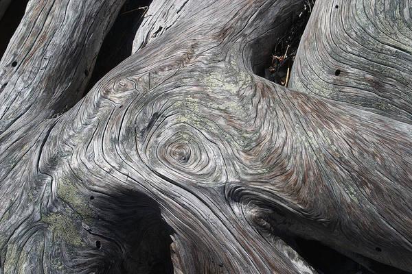 Photograph - Driftwood Ridges 5 by David Kleinsasser