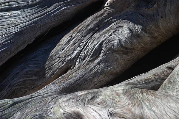 Photograph - Driftwood Swirls 2 by David Kleinsasser