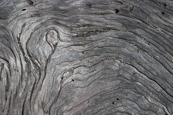 Photograph - Driftwood Swirls 3 by David Kleinsasser