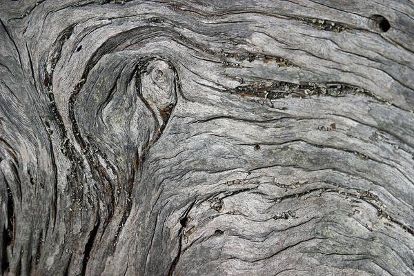Photograph - Driftwood Swirls 5 by David Kleinsasser