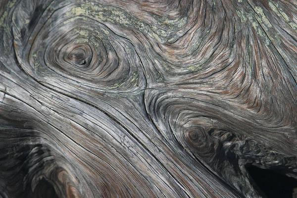 Photograph - Driftwood Swirls by David Kleinsasser