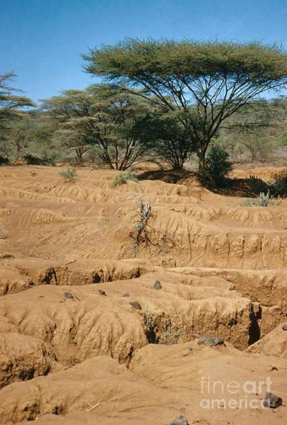 Photograph - Drought, Lake Baringo by Elizabeth Kingsley