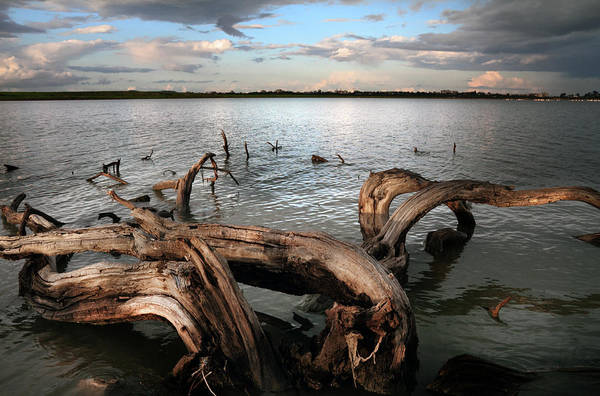Wall Art - Photograph - Dry Log In A Lake by Stelios Kleanthous