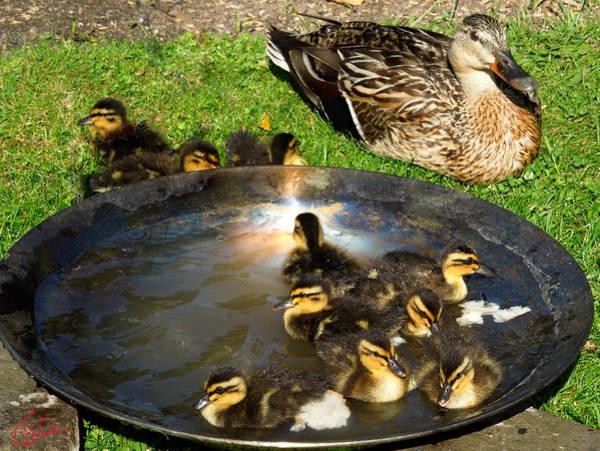 Photograph - Duck Family Joy In Garden  by Colette V Hera  Guggenheim