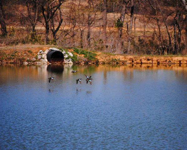 Photograph - Ducks Flying Over Pond I by Jai Johnson
