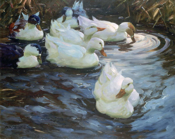 Wall Art - Photograph - Ducks On A Pond by Photos.com