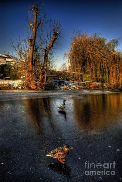 Photograph - Ducks On Ice by Yhun Suarez