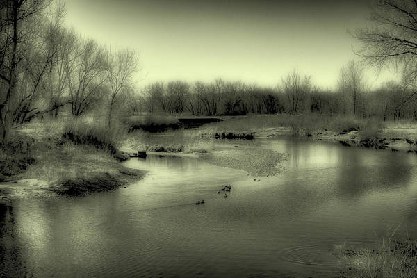 Wall Art - Photograph - Ducks On The South Platte River II by David Patterson