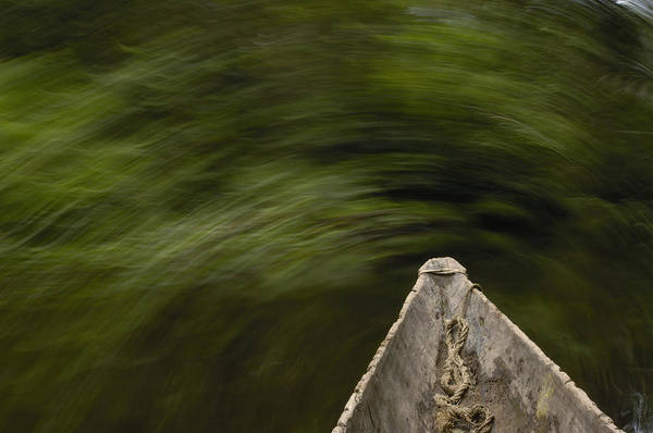 Photograph - Dugout Canoe In Blackwater Stream by Pete Oxford
