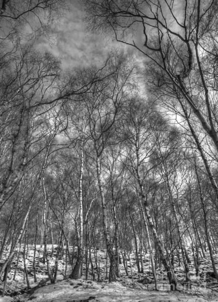 Photograph - Dusk Approaching by David Birchall