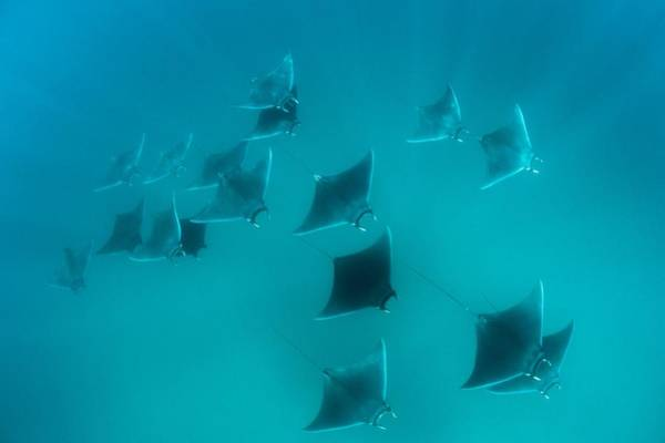 Eagle Ray Photograph - Eagle Ray by Louise Murray