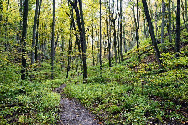Hockley Valley Photograph - Early Autumn Hike by Phill Doherty