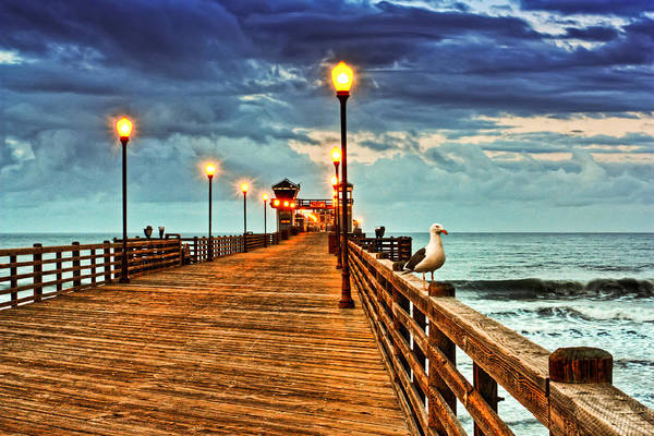 Photograph - Early Bird by Donna Pagakis