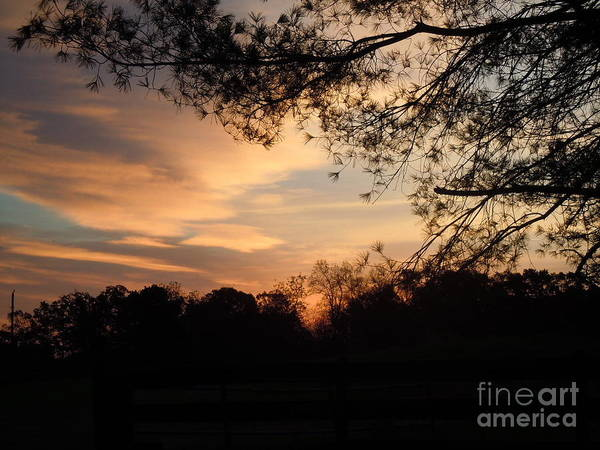 Wall Art - Photograph - Early Dawn by Pauline Ross