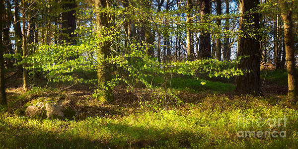 Early Spring Photograph - Early Green by Lutz Baar