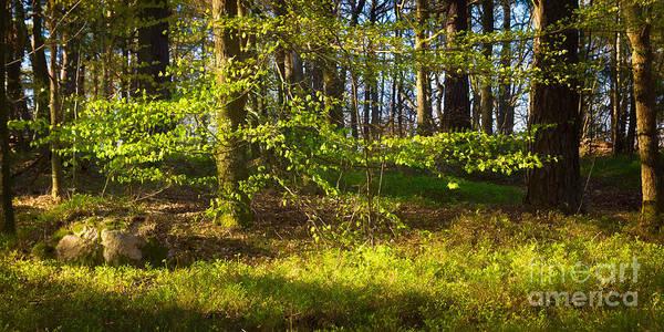 Photograph - Early Green by Lutz Baar