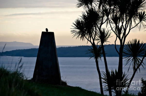Devonport Wall Art - Photograph - Early Morning Bird by Yurix Sardinelly