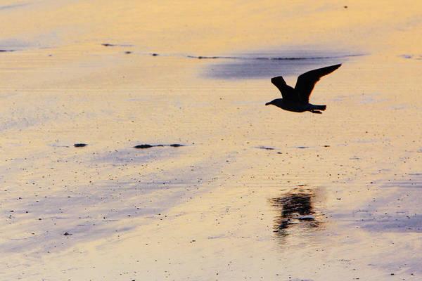 Photograph - Early Morning Flight by Rick Berk