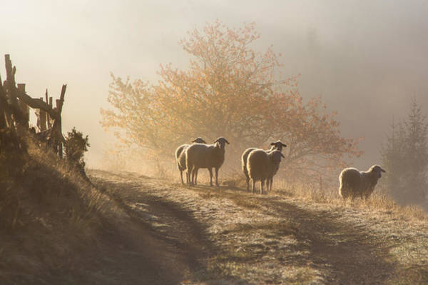 Photograph - Early Morning by Irene Becker Photography