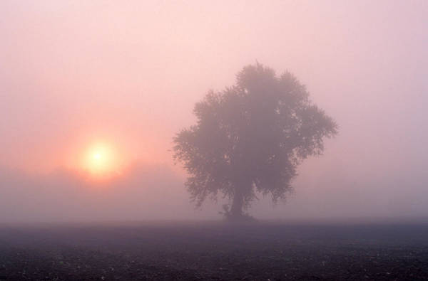 Photograph - Early Morning Mist by Larry Landolfi