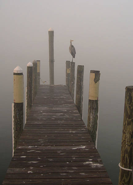 Early Morning On The Dock Art Print