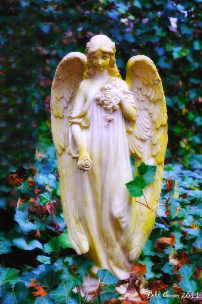 Photograph - Earth Angel by Bill Cannon