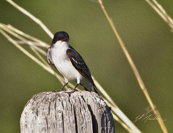 Photograph - Eastern Kingbird by Al  Mueller