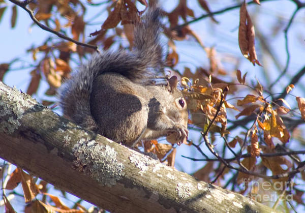 Photograph - Eating Squirrel by Michael Waters