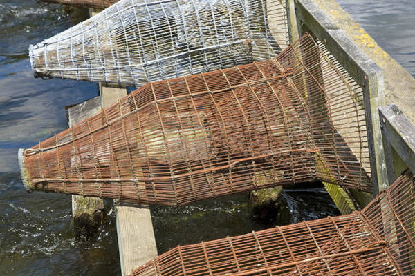 Trapping Photograph - Eeel Traps by Paul Rapson