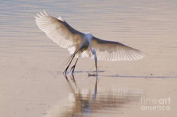 Egret Hunting Art Print