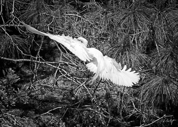 Lowcountry Digital Art - Egret On Approach by Phill Doherty