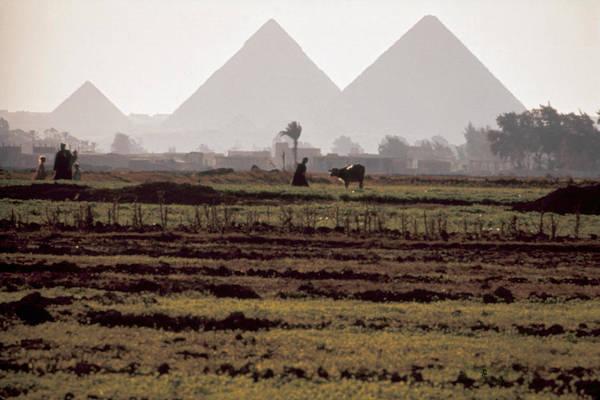 Photograph - Egypt: Giza Pyramids by Granger