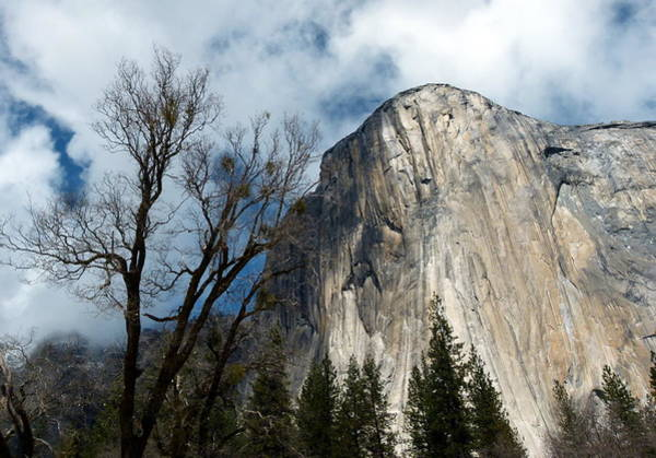Photograph - El Capitan Blue Sky Tree by Jeff Lowe