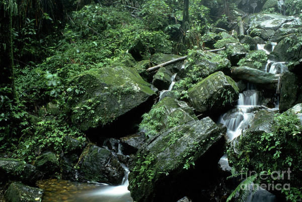 Photograph - El Yunque National Forest Rocks And Waterfall by Thomas R Fletcher