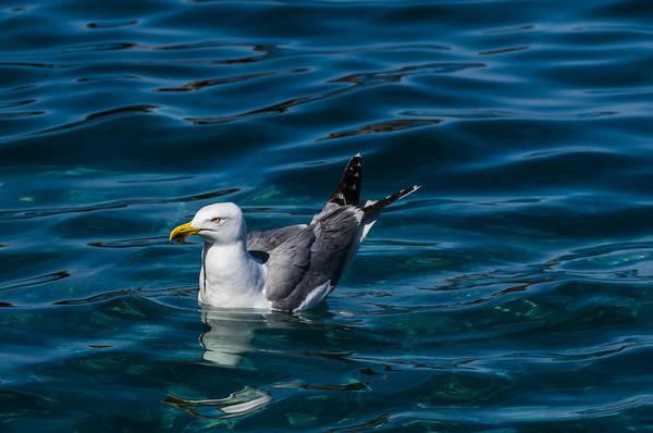 Photograph - Elba Island - Solitary Bird - Ph Enrico Pelos by Enrico Pelos