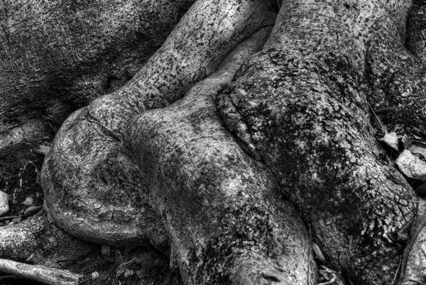Photograph - Elbow Roots by Dennis Dame