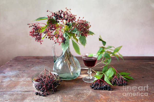 Green Berry Photograph - Elderberries 03 by Nailia Schwarz