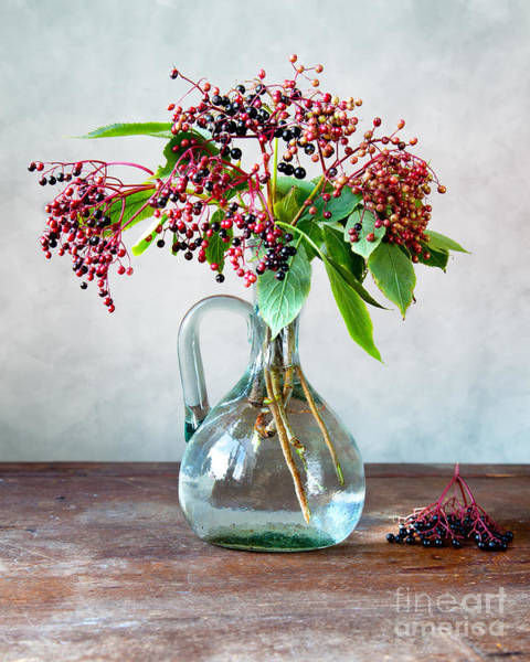 Green Berry Photograph - Elderberries 06 by Nailia Schwarz