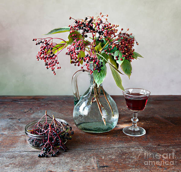 Green Berry Photograph - Elderberries 08 by Nailia Schwarz