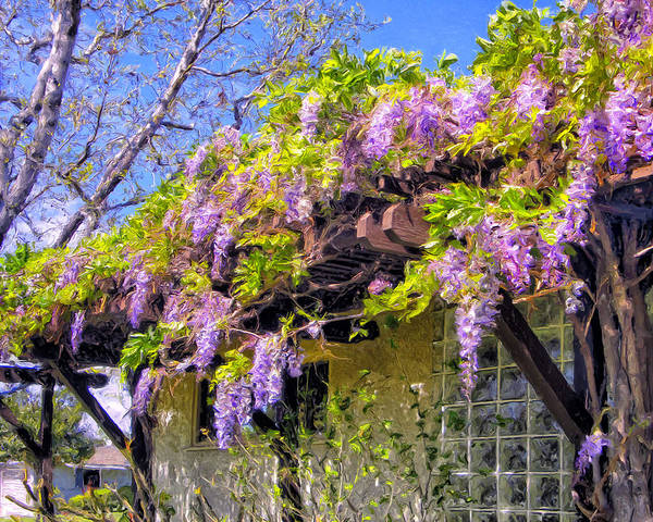 Painting - Eleanor's Wisteria by Dominic Piperata