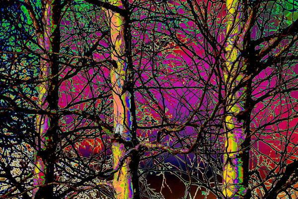 Moberly Photograph - Electric Birch by Matt Moberly