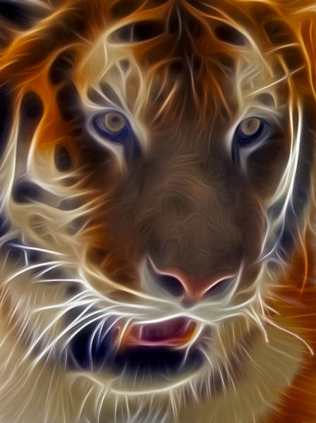 Photograph - Electric Tiger by Susan Candelario