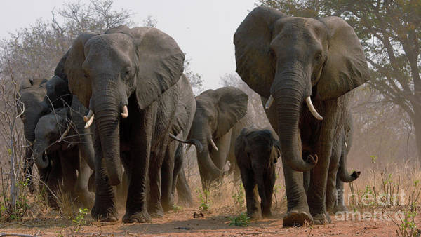 Photograph - Elephant Family by Mareko Marciniak
