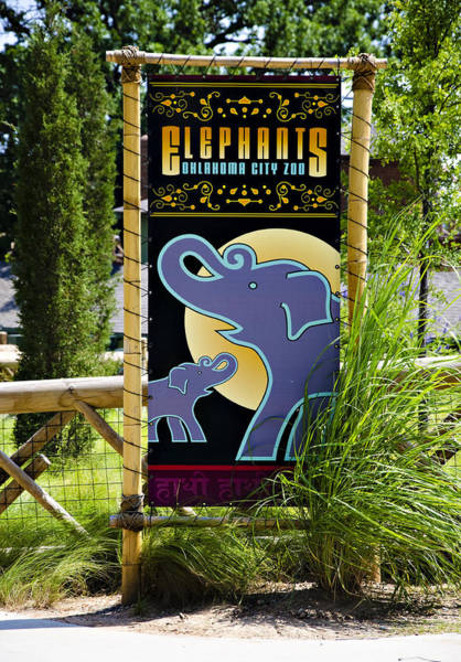 Ok Wall Art - Photograph - Elephants by Ricky Barnard