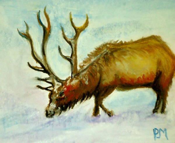 Elk Mountain Drawing - Elk by Pete Maier