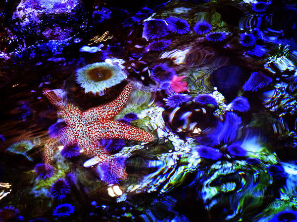 Photograph - Emerged Starfish by Xueling Zou