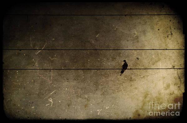 Wall Art - Photograph - Emotional Distance by Andrew Paranavitana