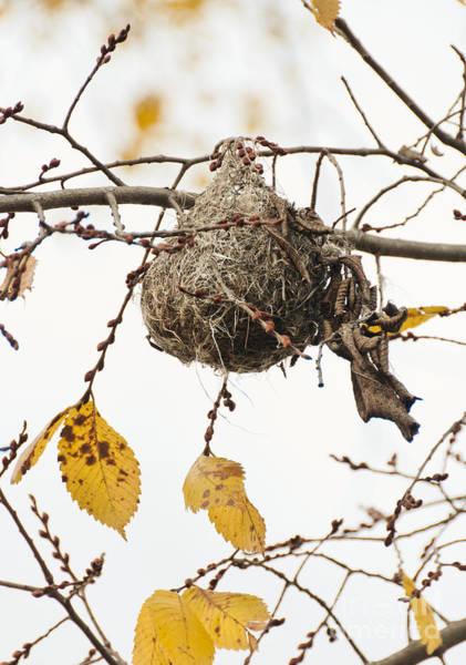 Empty Nest Wall Art - Photograph - Empty Nest by Cheryl Baxter
