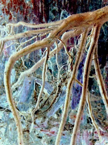 Grime Digital Art - Enchanted Forest 2 by Carol Grimes